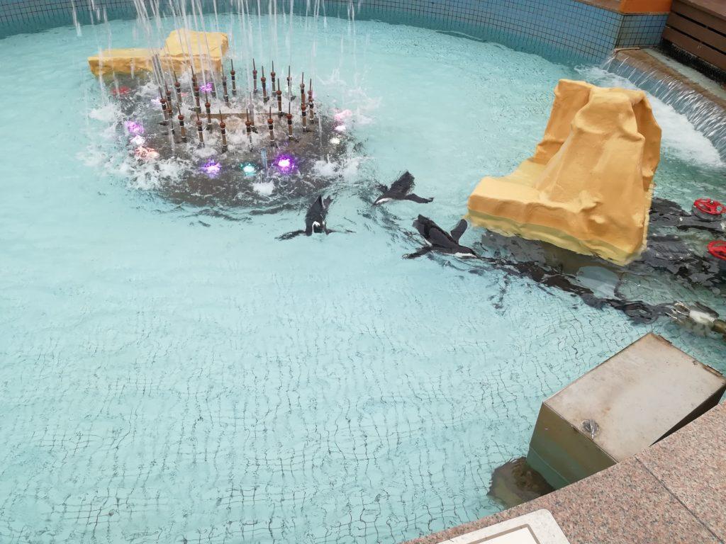 池で泳ぐペンギン