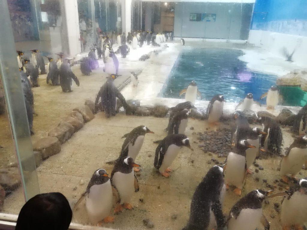 アドベンチャーワールド ペンギン画像