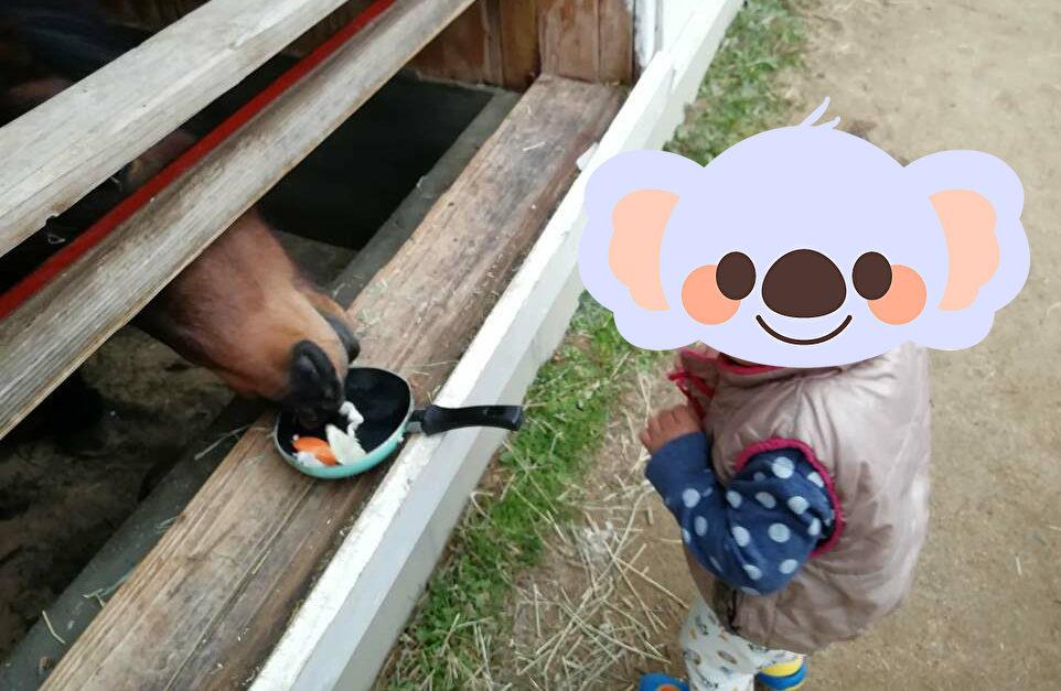 ヨーデルの森 馬 エサやり画像