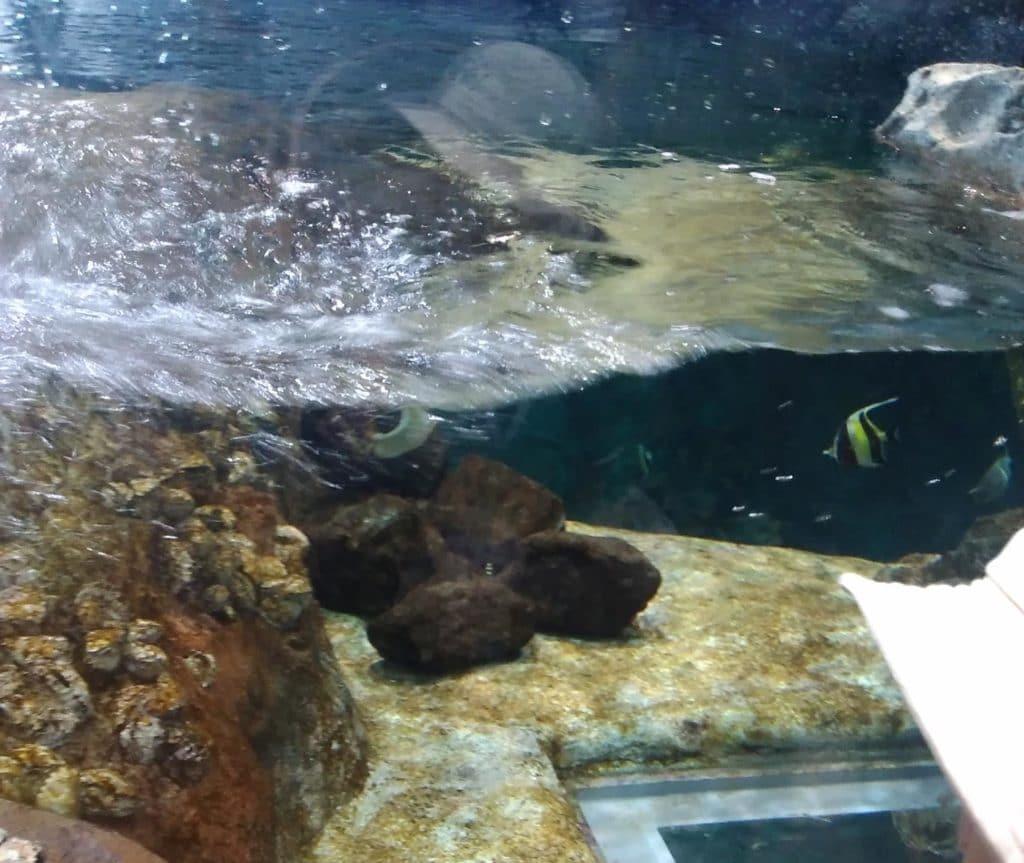 SATOUMI 竜串湾大水槽 海上画像
