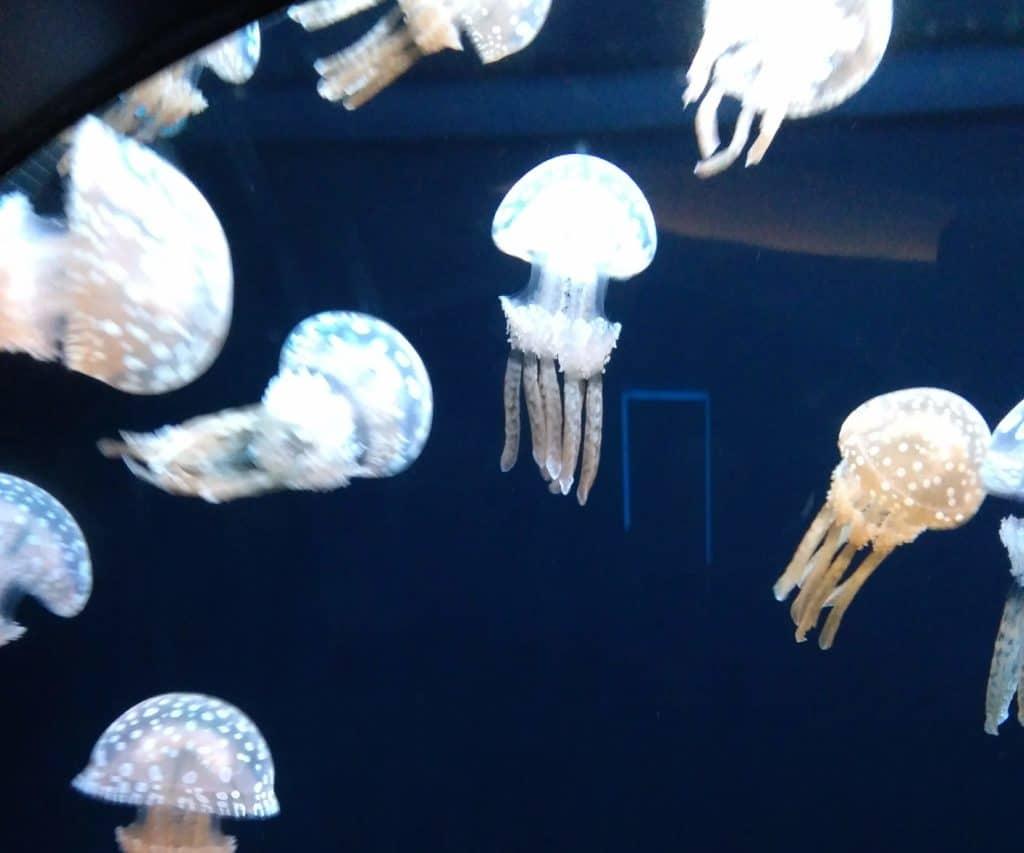 SATOUMI クラゲ 画像