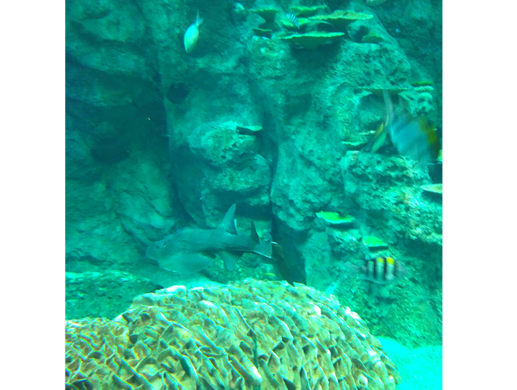 SATOUMI 竜串湾大水槽海中画像